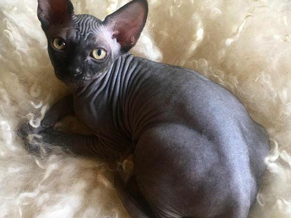 Где разместить лежанку для кошки | Ярмарка Мастеров - ручная работа, handmade