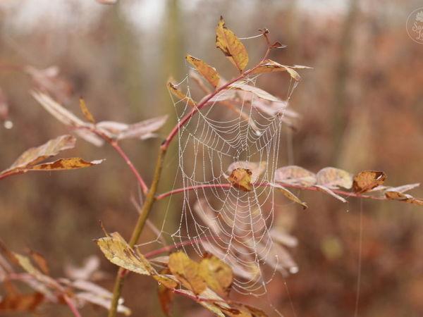 Осенние нити | Ярмарка Мастеров - ручная работа, handmade