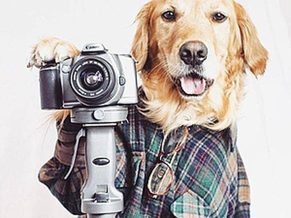 Собаки модели работа заработать онлайн тырныауз