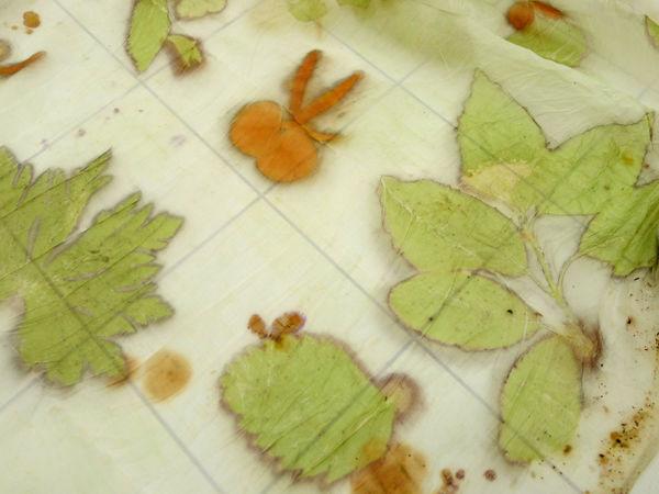 Отчеты и отзывы о мастер-классах по крашению растениями (эко-принт) | Ярмарка Мастеров - ручная работа, handmade