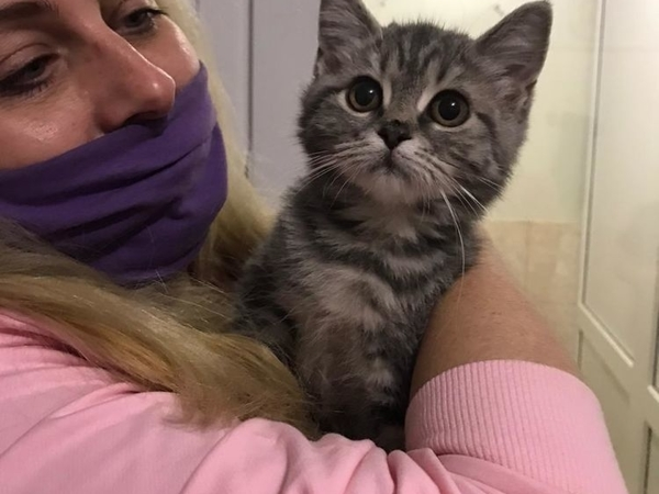 Срочный сбор на лечение котёнку | Ярмарка Мастеров - ручная работа, handmade