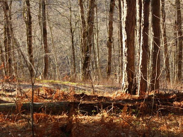 Лесные зарисовки: Сосновый бор | Ярмарка Мастеров - ручная работа, handmade