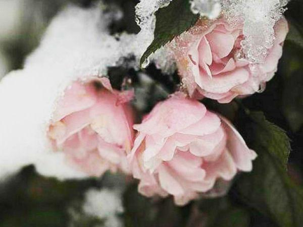 Зимний уход за кожей   Ярмарка Мастеров - ручная работа, handmade