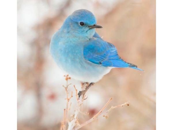 Выставка-аукцион акварельных рисунков «Синяя птица». Добро пожаловать!   Ярмарка Мастеров - ручная работа, handmade