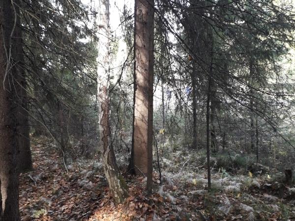 Эта Осень у меня полна поездками в лес   Ярмарка Мастеров - ручная работа, handmade