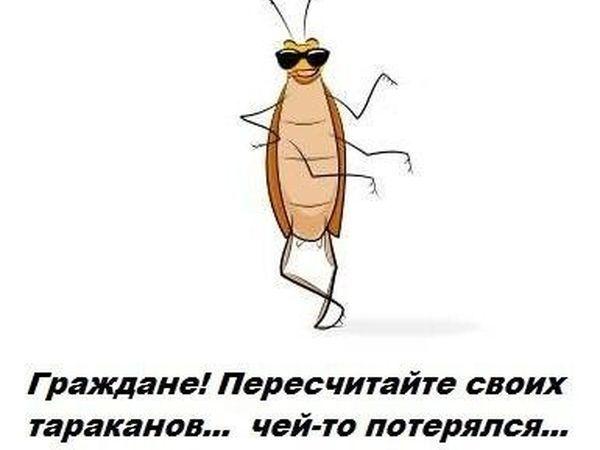 Тараканы приколы картинки