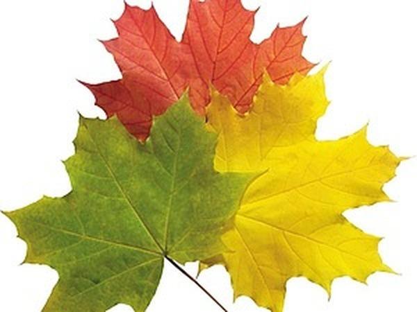 Новая коллекция - Осенний Ценопад .Не упусти момент! | Ярмарка Мастеров - ручная работа, handmade