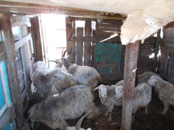 Разборка-сборка стайки для коз. Петя помощник | Ярмарка Мастеров - ручная работа, handmade