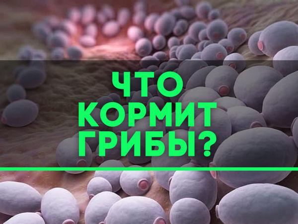 Не кормите ваши грибы!   Ярмарка Мастеров - ручная работа, handmade