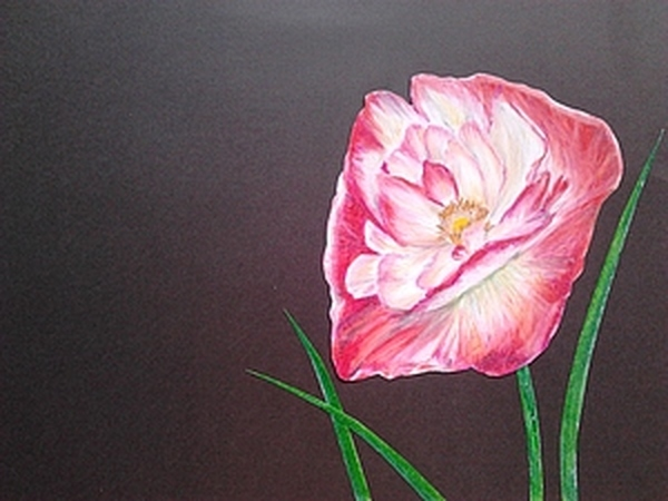Мастер-класс: Розовый мак. | Ярмарка Мастеров - ручная работа, handmade