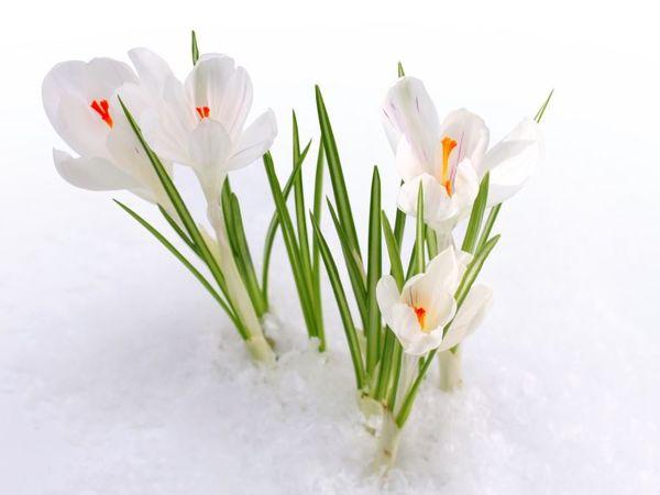 С Праздником 8 марта!!!   Ярмарка Мастеров - ручная работа, handmade