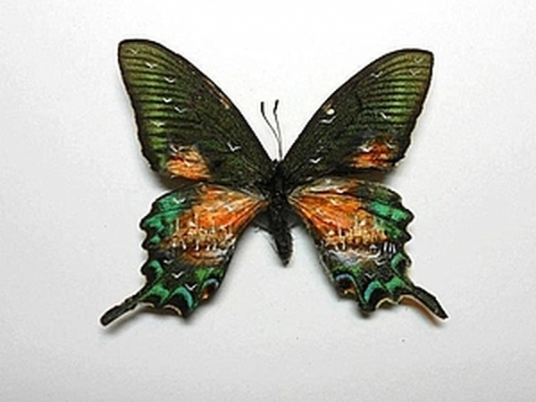 Картины на крыльях бабочек | Ярмарка Мастеров - ручная работа, handmade