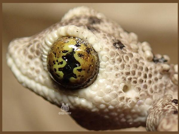 Лепим геккона из полимерной глины. Часть 2 | Ярмарка Мастеров - ручная работа, handmade
