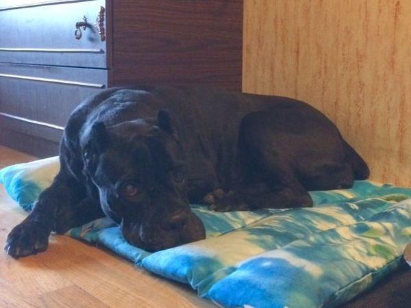 Шьем матрасик для собаки | Ярмарка Мастеров - ручная работа, handmade