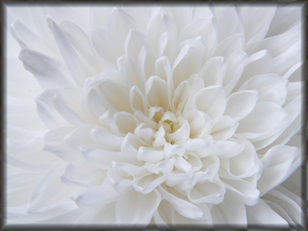 Алебастровый, молочный, амиантовый и другие оттенки белого цвета | Ярмарка Мастеров - ручная работа, handmade