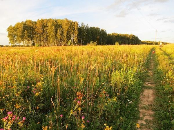 Август ,полевые цветы ,простор!   Ярмарка Мастеров - ручная работа, handmade