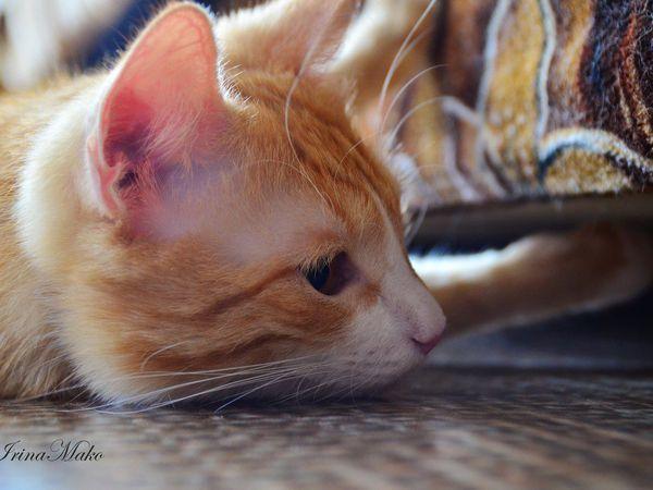 Котячьи поигрушки   Ярмарка Мастеров - ручная работа, handmade
