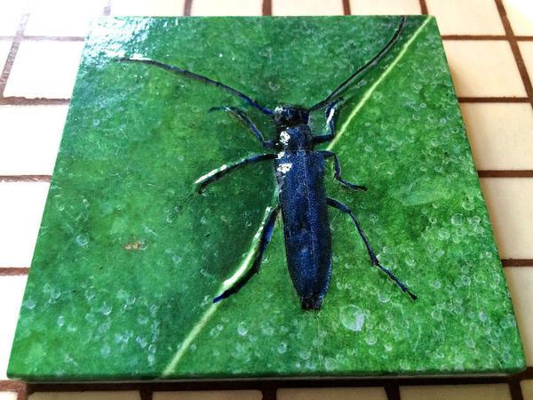 Плитка с растениями, фартук на кухню Ботаника | Ярмарка Мастеров - ручная работа, handmade