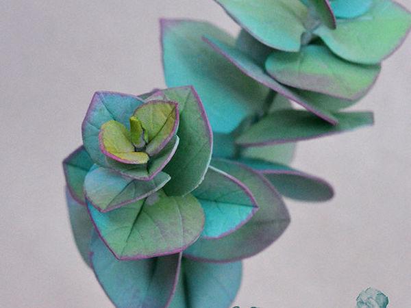 Создаем эвкалипт «Бейби Блю» из фоамирана | Ярмарка Мастеров - ручная работа, handmade