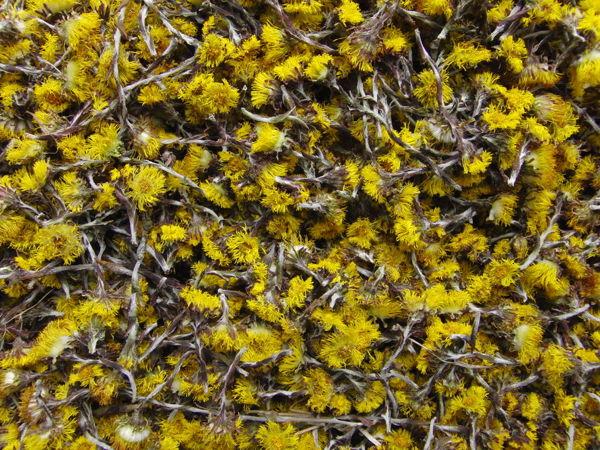 Новый урожай цветков мать-и-мачехи! | Ярмарка Мастеров - ручная работа, handmade