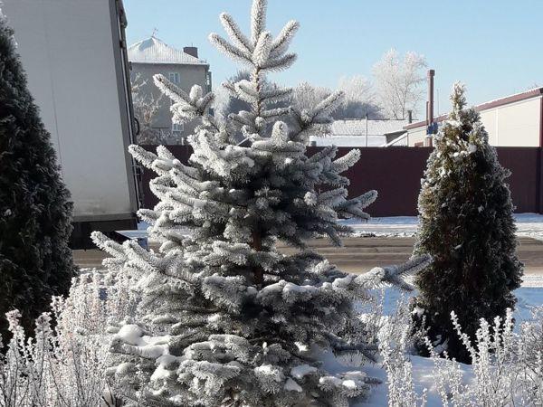 С первым днём зимы! | Ярмарка Мастеров - ручная работа, handmade