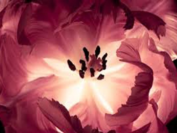 Расцвел цветочек аленький   Ярмарка Мастеров - ручная работа, handmade