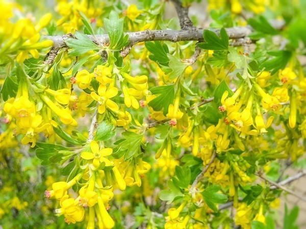 Весна))) Всем весны!!! | Ярмарка Мастеров - ручная работа, handmade