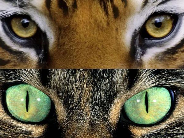Глазами кошки   Ярмарка Мастеров - ручная работа, handmade