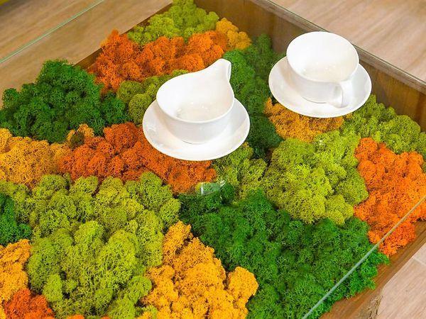 Стабилизированный мох. Знакомство | Ярмарка Мастеров - ручная работа, handmade