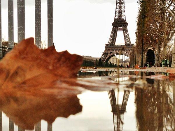 Аромат осени: тенденции парфюмерии межсезонья | Ярмарка Мастеров - ручная работа, handmade