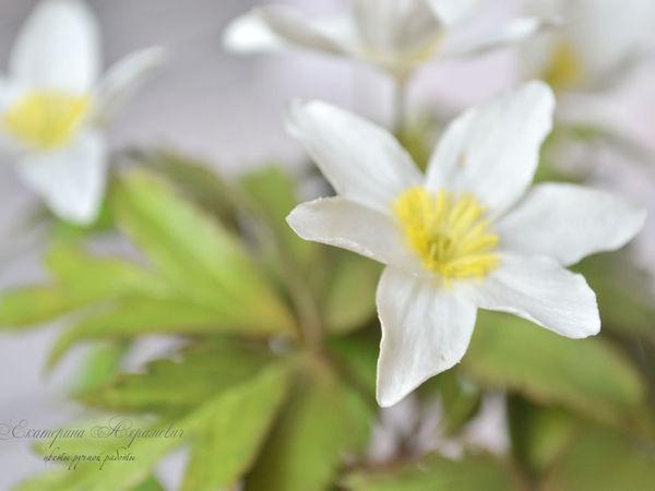Создаем цветок «ветреница дубравная»: работаем с фоамираном | Ярмарка Мастеров - ручная работа, handmade