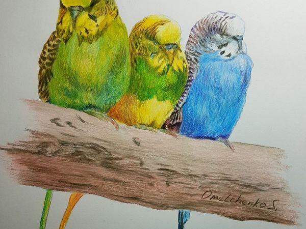 Рисунок: попугаи волнистые   Ярмарка Мастеров - ручная работа, handmade