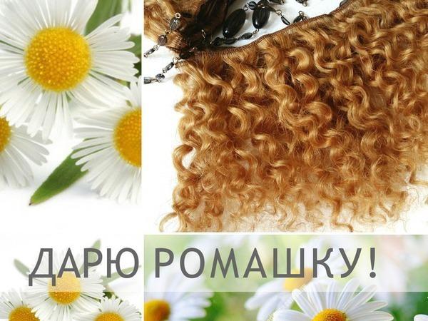 Дарю Ромашку | Ярмарка Мастеров - ручная работа, handmade