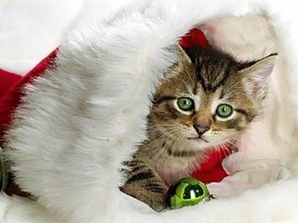 Новый Год - время чудес! Или большая подборка о нем...! | Ярмарка Мастеров - ручная работа, handmade