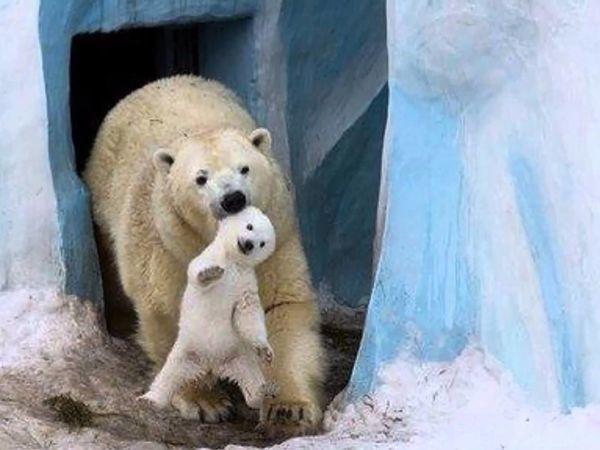 А в Вашей коллекции есть медведь из Столицы Сибири? | Ярмарка Мастеров - ручная работа, handmade
