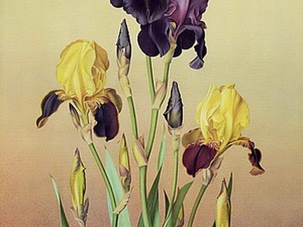 Эффектный ирис в современной живописи: 27 прекрасных работ | Ярмарка Мастеров - ручная работа, handmade