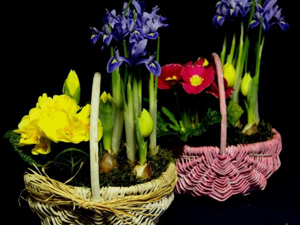 Новинки! Весеннее предложение к 8 марта. Аранжировки из луковичных и садовых цветов в подарок. Оригинальное предложение | Ярмарка Мастеров - ручная работа, handmade