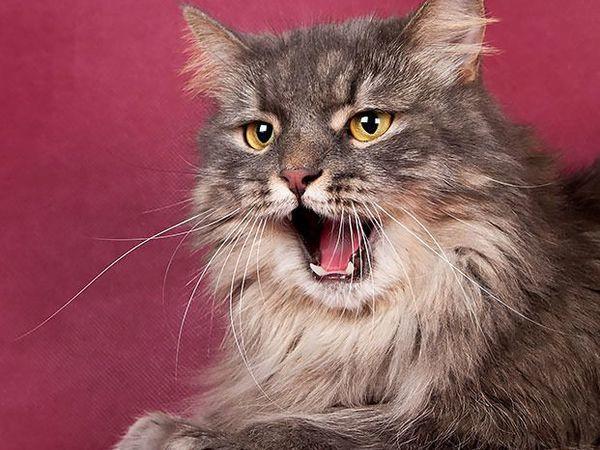 Замечательные котейки ищут дом.   Ярмарка Мастеров - ручная работа, handmade