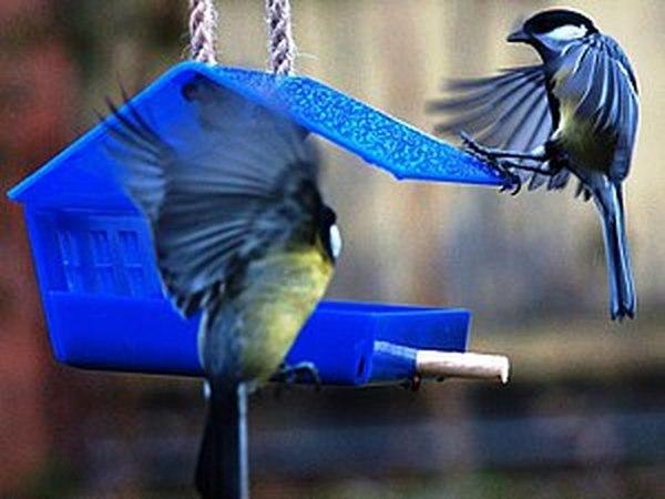 Боятся ли птицы цветные кормушки? | Ярмарка Мастеров - ручная работа, handmade