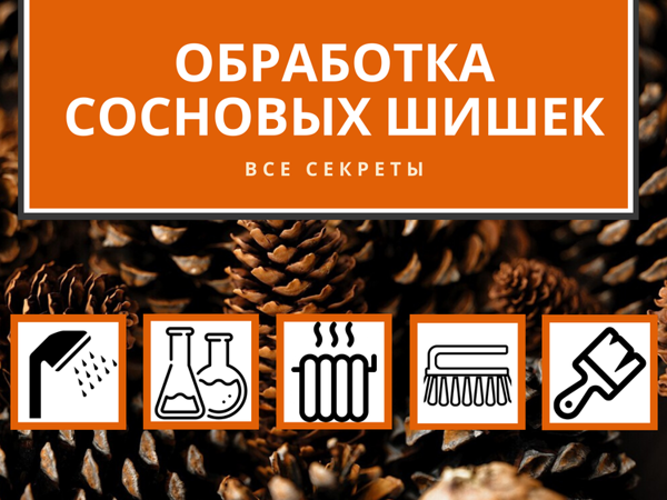 Обработка сосновых шишек: все секреты | Ярмарка Мастеров - ручная работа, handmade