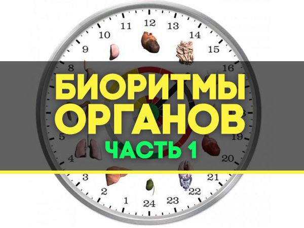 Биоритмы внутренних органов   Ярмарка Мастеров - ручная работа, handmade