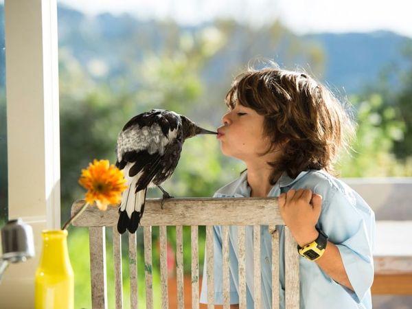 Сорока по имени Пингвин: как умная птица помогла семейству Блум справиться с трудностями | Ярмарка Мастеров - ручная работа, handmade