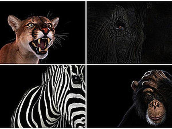 Портреты крупным планом от Brad Wilson. Источники вдохновения | Ярмарка Мастеров - ручная работа, handmade