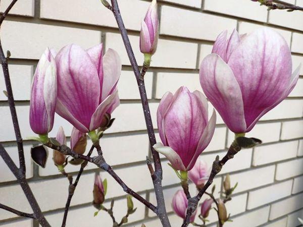 Моментальная весна. Прогулка по саду | Ярмарка Мастеров - ручная работа, handmade