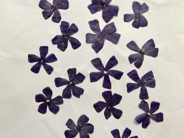 Цветки барвинка (плоская сушка) | Ярмарка Мастеров - ручная работа, handmade