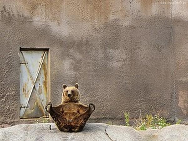 Живые фото   Ярмарка Мастеров - ручная работа, handmade