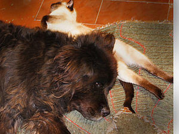 Для тех, кто хочет свалять собачью шерсть | Ярмарка Мастеров - ручная работа, handmade