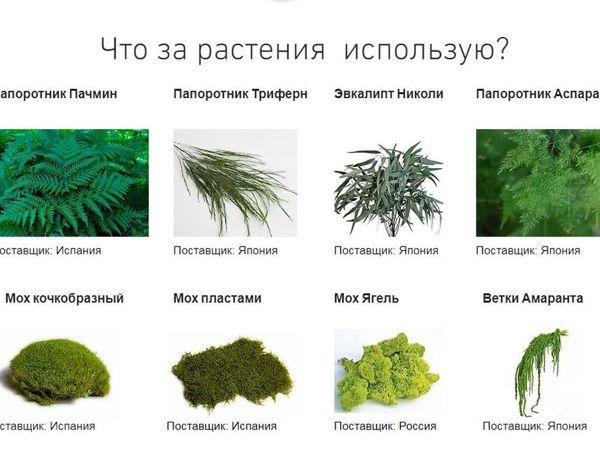 Какие растения использую?   Ярмарка Мастеров - ручная работа, handmade