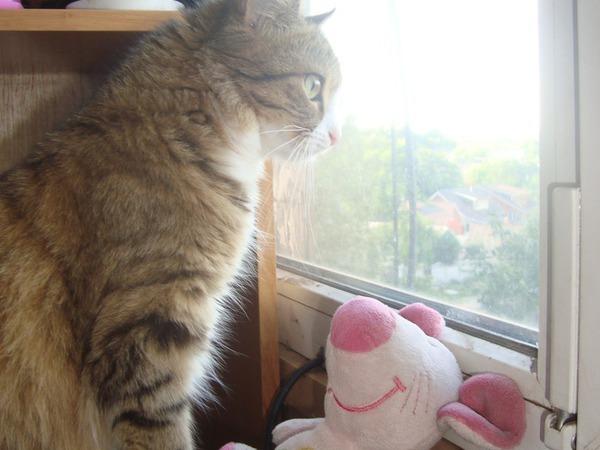 Что видит кошка из окошка?   Ярмарка Мастеров - ручная работа, handmade