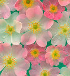 fleur-decor
